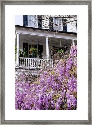 Springtime Wisteria In Bloom Framed Print