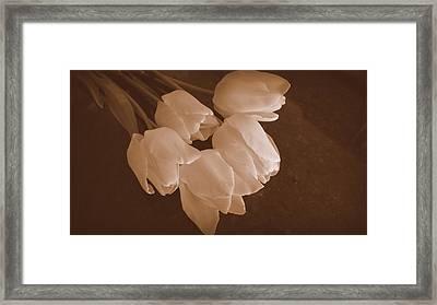 Spring Tulips In Sepia Framed Print