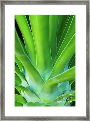 Sprout Framed Print by Steven Dillon