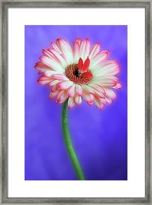 Sprouting Dahlia Framed Print