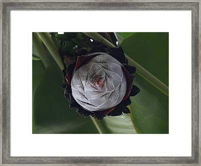 Sprouting Framed Print by Jacob Stempky