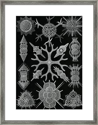 Spumellaria Framed Print by Ernst Haeckel