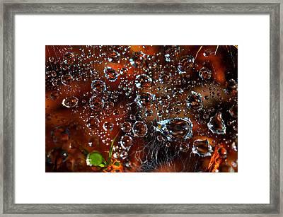 Spun Silver By Dianne Cowen Framed Print