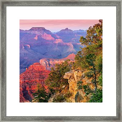 Mn5055 Framed Print by Mikes Nature