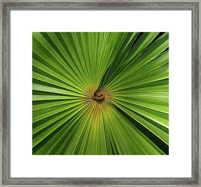 Square Palmetto Leaf Framed Print by Rosalie Scanlon