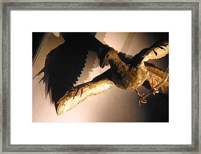 Squark Framed Print by Jez C Self