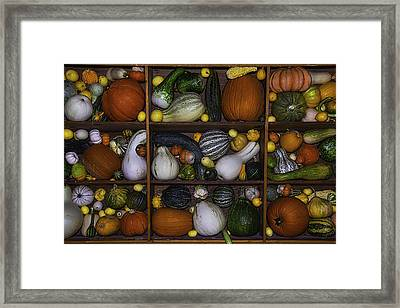Squash And Gourds In Compartments Framed Print by Garry Gay