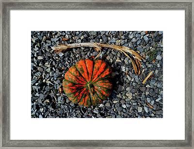 Squash Gravel Stem Framed Print