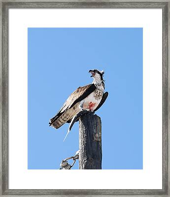Framed Print featuring the photograph Squawk  by Gouzel -