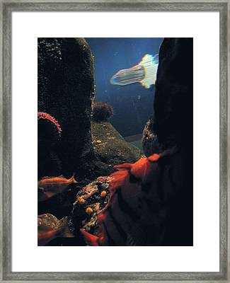 Squid And Fish Framed Print by Jess Thorsen