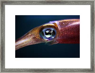 Squid Eye Framed Print