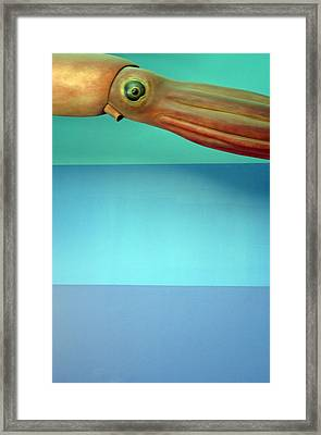 Squidoolie Framed Print by Jez C Self