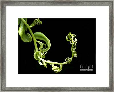 Squiggle Framed Print by Sabrina L Ryan
