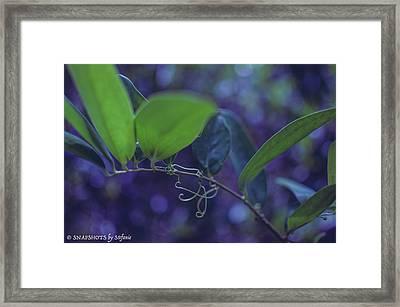 squiggle Vine Framed Print by Stefanie Silva
