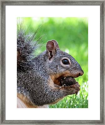 Squirrel 1 Framed Print