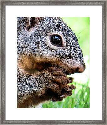 Squirrel 3 Framed Print