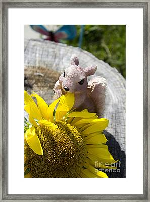 Squirrel And Sun Flower Framed Print