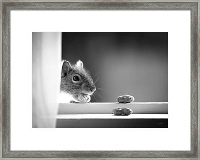 Squirrel And Three Peanuts Framed Print by Bob Orsillo
