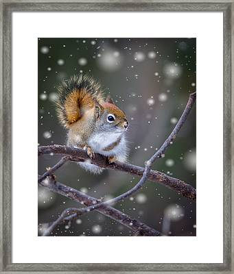 Squirrel Balancing Act Framed Print