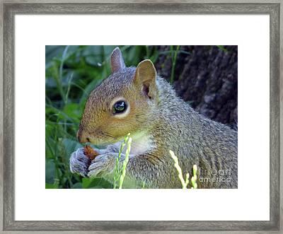 Squirrel Eating Framed Print