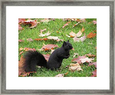 Squirrel Exploring Framed Print by Richard Mitchell