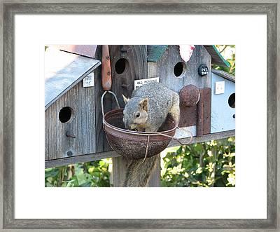 Squirrel Feeding Framed Print