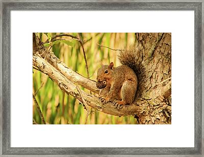 Squirrel In A Tree In The Marsh Framed Print