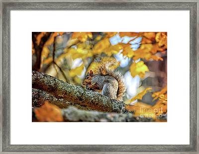 Framed Print featuring the photograph Squirrel In Autumn by Kerri Farley of New River Nature