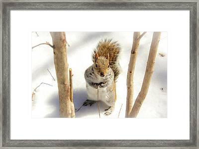 Squirrel In Snow Framed Print