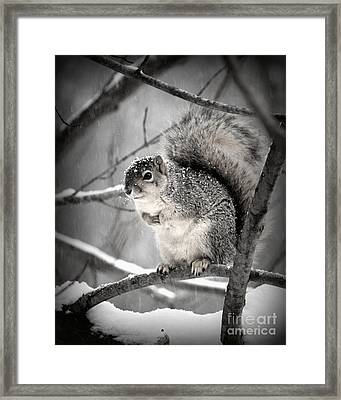 Framed Print featuring the photograph Squirrel  In The Maple Tree 2 by Lila Fisher-Wenzel