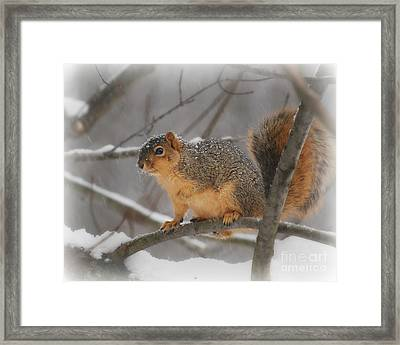 Framed Print featuring the photograph Squirrel  In The Maple Tree 3 by Lila Fisher-Wenzel