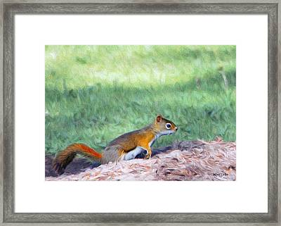 Squirrel In The Park Framed Print by Jeff Kolker
