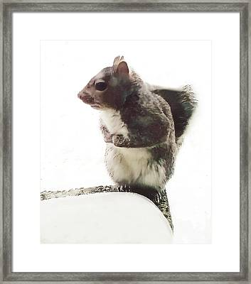 Framed Print featuring the photograph Squirrel In The Snow by Roger Bester