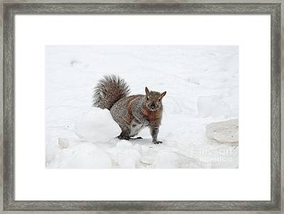 Framed Print featuring the photograph Squirrel In Winter Snow by Charline Xia