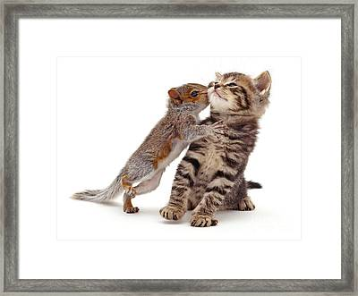 Squirrel Kiss Framed Print