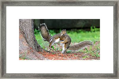 Squirrel Kung-fu  Framed Print by Celestial  Blue