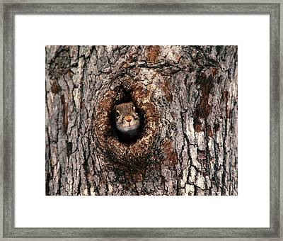 Squirrel Framed Print by Lloyd Grotjan