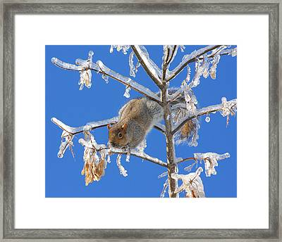 Framed Print featuring the photograph Squirrel On Icy Branches by Doris Potter