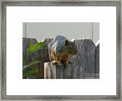 Framed Print featuring the photograph Squirrel On Post by Felipe Adan Lerma