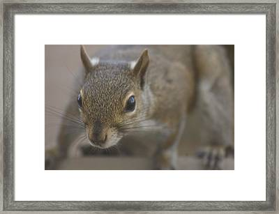 Squirrel On The Hunt Framed Print by Anthony Towers