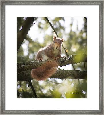 Squirrel On The Spot Framed Print by Stwayne Keubrick