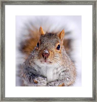 Squirrel Portrait Framed Print by Mircea Costina Photography