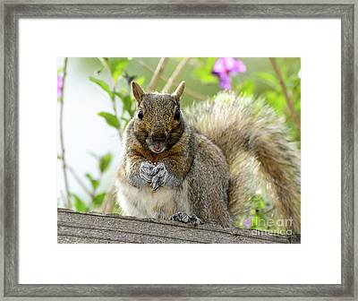 Squirrel Ready To Whistle Framed Print