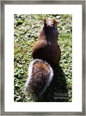 Squirrel S Back Framed Print