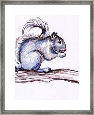 Squirrel Sketch Framed Print