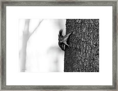 Squirrel Trees Fog Framed Print by Bob Orsillo