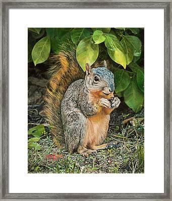 Squirrel Under Bush Framed Print