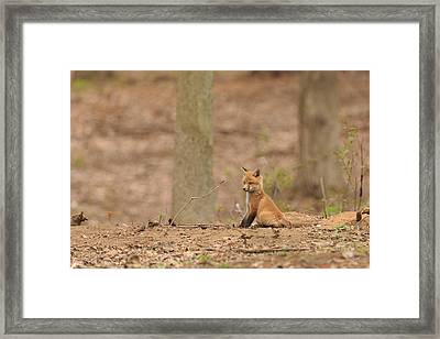 Squirrel Watch Framed Print by Everet Regal