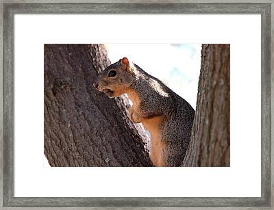 Squirrel With A Nut Framed Print by Teresa Blanton