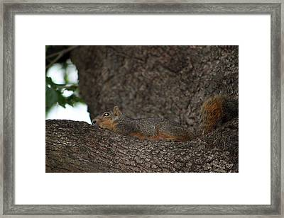 Squirrel1 Framed Print by Evelyn Patrick